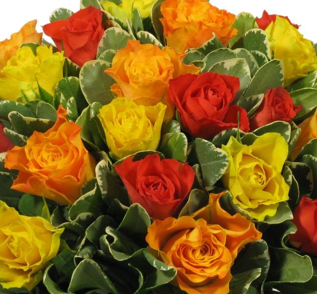 Rosas Em Cubo Ii All Flowerspt